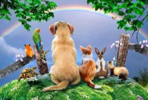 Pet Poems – ANGEL PAWPRINT-Compassionate Pet Loss Grief Counseling